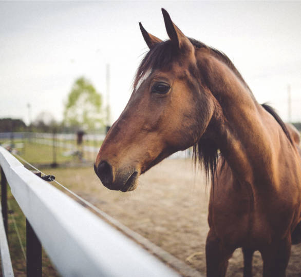 Farm & Equine Insurance